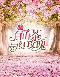 白山茶与红玫瑰小说最新章节在线免费阅读全文